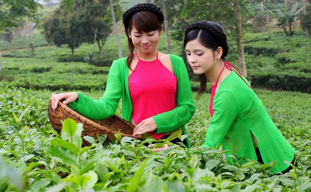 bán chè Thái Nguyên ở Hà Nội