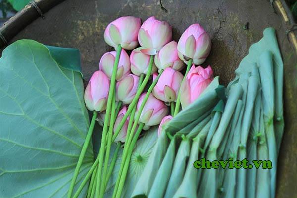 Trà ướp bông sen Tây Hồ được làm từ giống sen Bách diệp Hồ Tây.