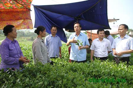Bộ trưởng Đào Ngọc Dung thăm đồi chè