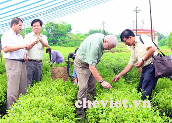 Vùng Chè Phú Lương Thái Nguyên