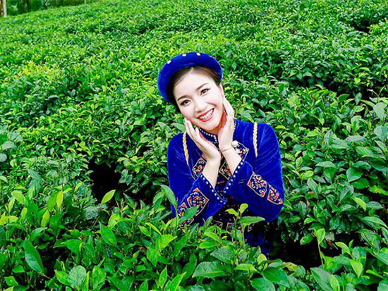 Văn hóa trà Thái Nguyên