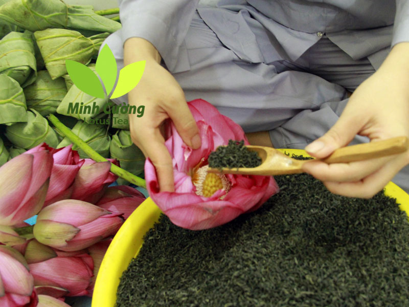 Trà được ướp vào bên trong búp sen tươi