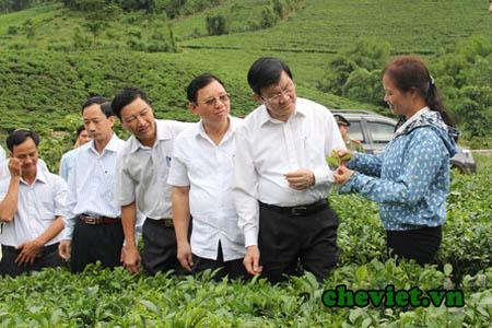 Chủ tịch Nước thăm đồi chè Thái Nguyên