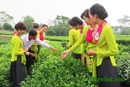 Chè Tân Cương Khang Thái