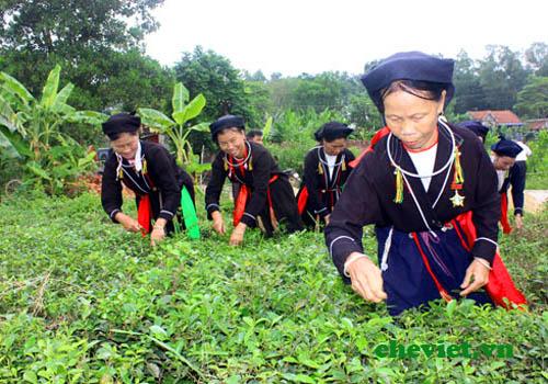 Lế hội Trà Thái Nguyên