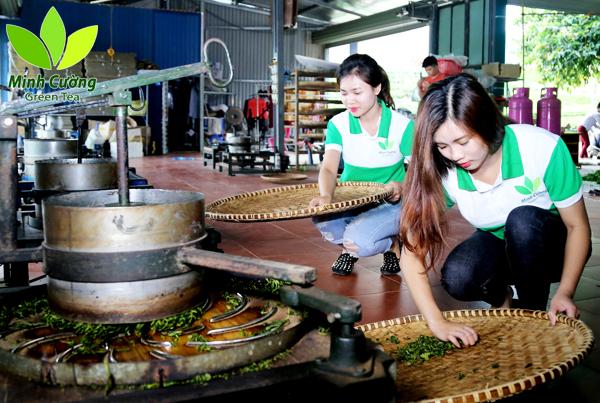 chế biến trà thái nguyên tại nhà xưởng Trà Minh Cường