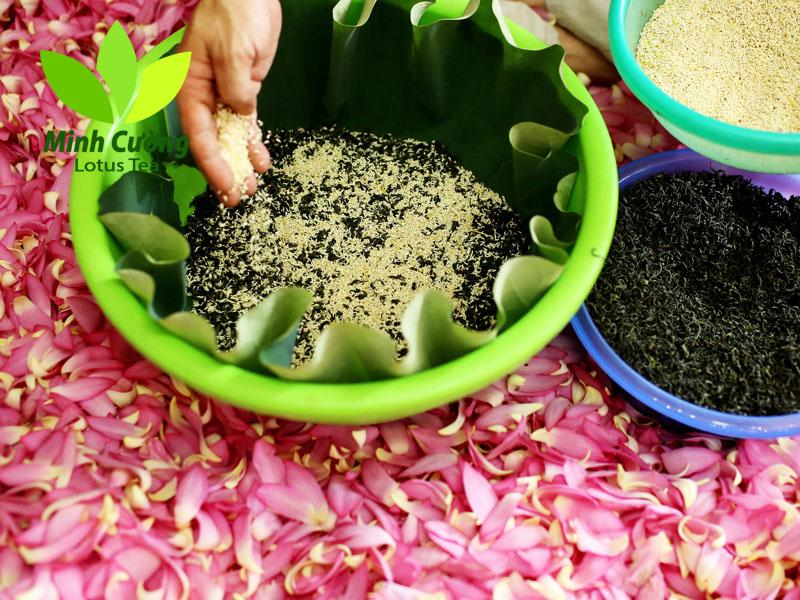 Công đoạn vào hương, ủ trà với nhụy sen
